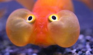 inflamacion pez globo